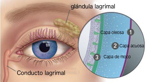 capas de las lagrimas del ojo